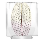 Skeleton Leaf Shower Curtain by Elena Elisseeva