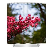 Skylit Blooms Shower Curtain