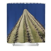 Skyward View Of A Saguaro Cactus Shower Curtain