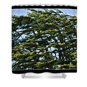 Slanted Branches Shower Curtain