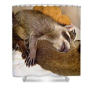Sleep Buddies Shower Curtain