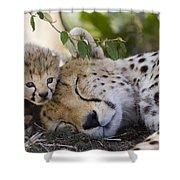 Sleeping Cheetah And Cub Kenya Shower Curtain