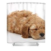 Sleeping Cockerpoo Puppy Shower Curtain