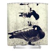 Sleeping Ducks Shower Curtain by Joana Kruse