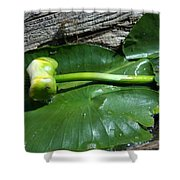 Sleeping Lily Shower Curtain