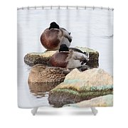 Sleeping Mallards Shower Curtain