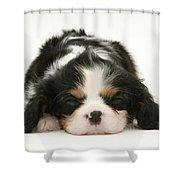 Sleeping Puppy Shower Curtain by Jane Burton