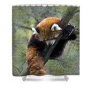 sleeping Small Panda Shower Curtain