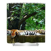 Sleeping Tiger Shower Curtain
