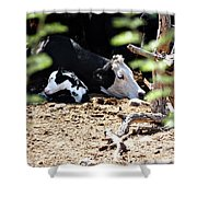 Sleepy Arizona Cows Shower Curtain