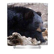 Sleepy Black Bear Shower Curtain