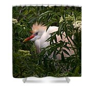 Sleepy Egret In Elderberry Shower Curtain
