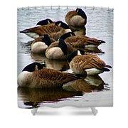 Sleepy Geese Shower Curtain