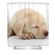 Sleepy Labrador Pup Shower Curtain