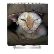 Sleepy Oliver 2 Shower Curtain