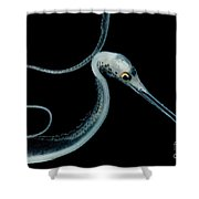 Slender Snipe Eel Shower Curtain