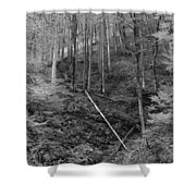 Slovenian Forest In Black And White Shower Curtain