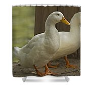Slow Traffic Keep Right Shower Curtain