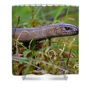 Slowworm Shower Curtain
