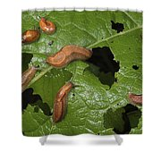 Slugs And A Snail Are Feeding On Leaves Shower Curtain