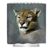 Slumbering Mountain Lion Shower Curtain