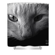Sly Shower Curtain