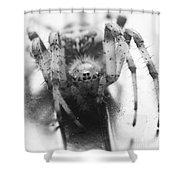 Small Alberta Spider Shower Curtain