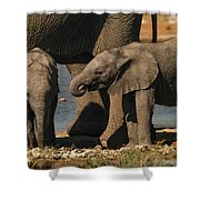 Small And Big Shower Curtain