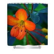 Small Orange Flower Shower Curtain