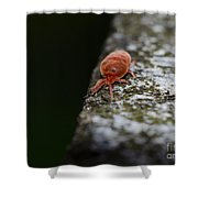 Small Red Insect Shower Curtain