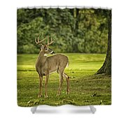 Small Stag Shower Curtain