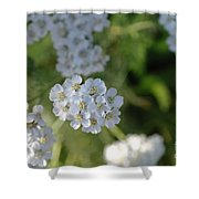 Small White Wildflowers  Shower Curtain