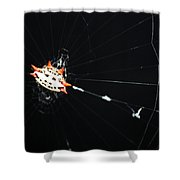 Smiley Crab Spider Shower Curtain