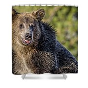 Smiling Grizzly Shower Curtain