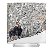 Smiling Moose Shower Curtain