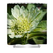 Snail And Wildflower Shower Curtain