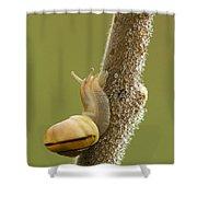 Snail In Dew Shower Curtain