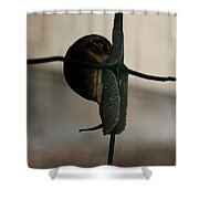 Snail On The Fence Shower Curtain