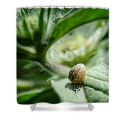 Snail On The Leaf Shower Curtain