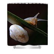 Snail Shower Curtain by Stelios Kleanthous