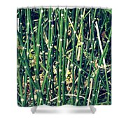 Snake Grass On The Beach Shower Curtain