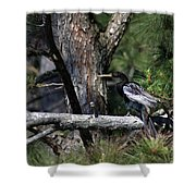 Snakebird At The Rookery Shower Curtain