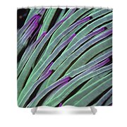 Snakelocks Anemone Anemonia Viridis Shower Curtain