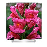 Snapdragon  Shower Curtain