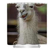 Snickering Alpaca Shower Curtain