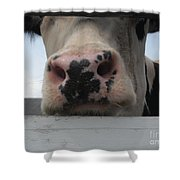 Sniffing Cow Shower Curtain