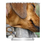 Sniffing Out Dreams Shower Curtain