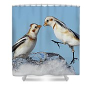 Snow Buntings And Ice Shower Curtain