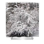 Snow Bush Shower Curtain