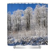 Snow Covered Maple Trees Iron Hill Shower Curtain